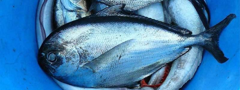 Toter Fisch im Eimer