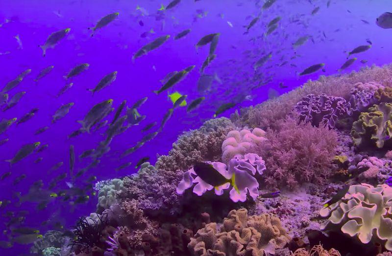 chasing coral der film
