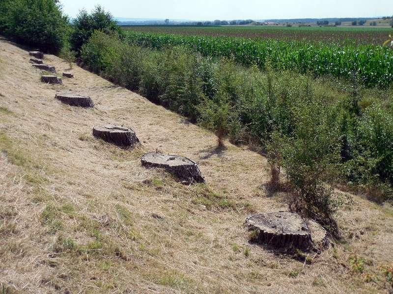 Abholzung Regenwald für Getreideanbau